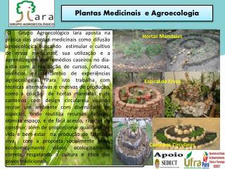 Plantas Medicinais  e Agroecologia