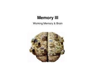 Memory III Working Memory  Brain