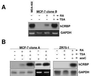 MCF-7 clone A