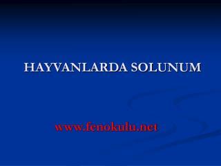 HAYVANLARDA SOLUNUM