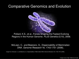 Comparative Genomics and Evolution