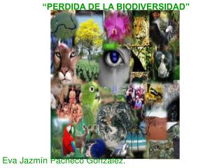 """""""PERDIDA DE LA BIODIVERSIDAD"""""""