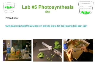 Lab #5 Photosynthesis S61