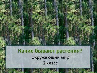 Какие бывают растения? Окружающий мир 2 класс