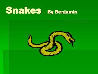 Snakes   By Benjamin