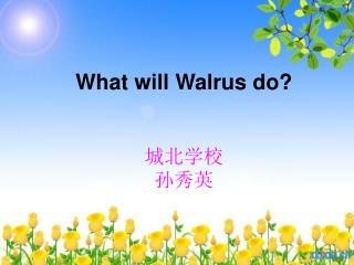 What will Walrus do? 城北学校 孙秀英