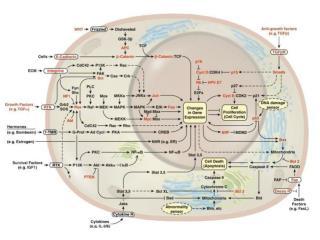 Trasduzione mediata da modificazione del potenziale di membrana