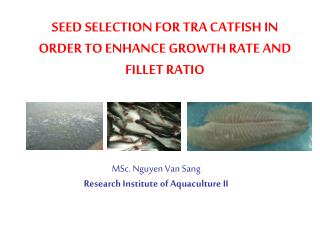 SEED SELECTION FOR TRA CATFISH IN ORDER TO ENHANCE GROWTH RATE AND FILLET RATIO