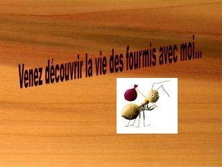 Venez découvrir la vie des fourmis avec moi...