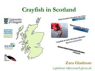 Crayfish in Scotland