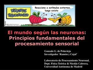 El mundo según las neuronas :  Principios fundamentales del procesamiento sensorial