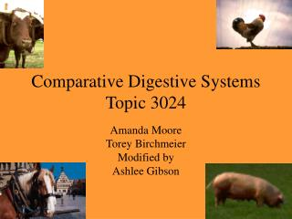Comparative Digestive Systems Topic 3024