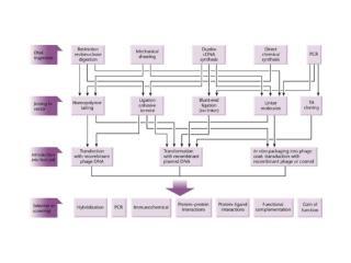 Abundance classes of typical mRNA populations