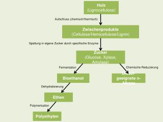 Holz  ( Lignocellulose )