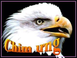 Chim ưng
