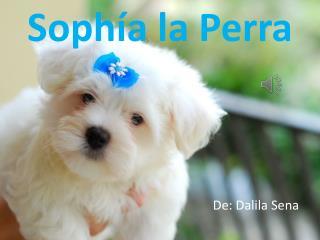 Sophía la Perra