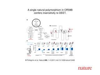 M Pellegrino  et al. Nature 000 , 1-4 (2011) doi:10.1038/nature10438
