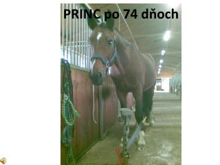 PRINC po 74 dňoch