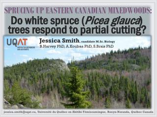 SPRUCING UP EASTERN CANADIAN MIXEDWOODS: