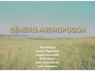 GÊNERO ANDROPOGON