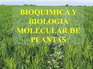 BIOQUIMICA Y BIOLOGIA MOLECULAR DE PLANTAS