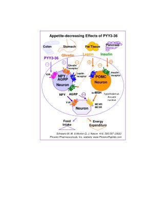 NPY / AGRP  Neuron