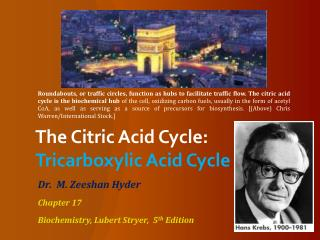 The Citric Acid Cycle: Tricarboxylic Acid Cycle