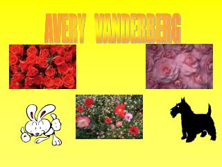 AVERY   VANDERBERG