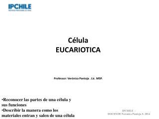 Célula EUCARIOTICA Professor: Verónica Pantoja . Lic. MSP.