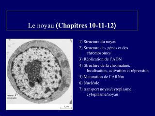Le noyau  ( Chapitres 10-11-12 )