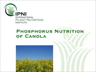 Phosphorus Nutrition of Canola