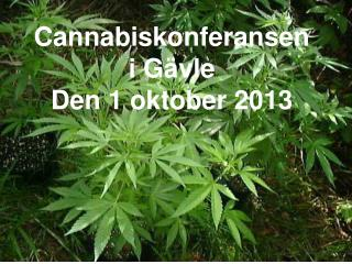 Cannabiskonferansen  i Gävle  Den 1 oktober 2013