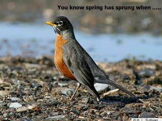 You know spring has sprung when …..