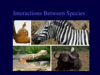 Interactions Between Species