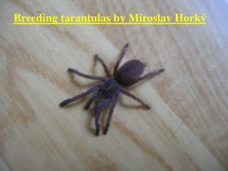 Breeding tarantulas by Miroslav Horký