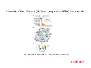 MN Krishnan et al. Nature 000 , 1- 4  (2008) doi:10.1038/nature07 207