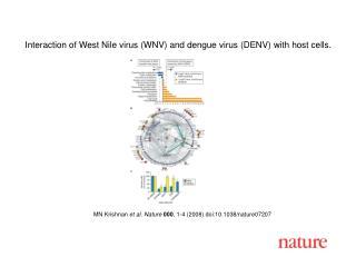 MN Krishnan et al. Nature 000 , 1- 4  (2008) doi:10.1038/nature07 207