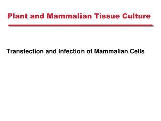 Plant and Mammalian Tissue Culture