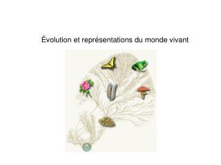 Évolution et représentations du monde vivant