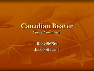 Canadian Beaver Castor Canadensis
