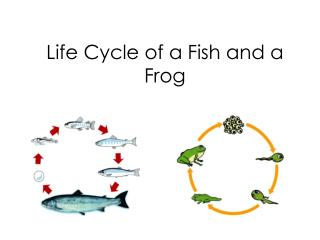 Life Cycle of a Fish and a Frog