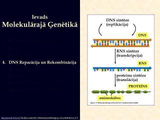 Ievads Molekulārajā Ģenētikā