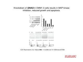 CDV Raamsdonk  et al. Nature 000 , 1- 4  (2008) doi:10.1038/nature0758 6