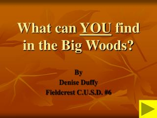What can  YOU  find in the Big Woods?
