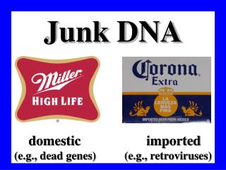 Junk DNA  domestic                   imported (e.g., dead genes)          (e.g., retroviruses)