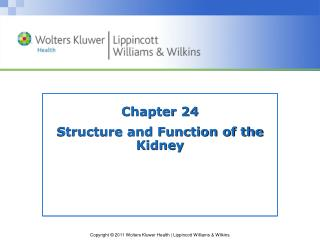 Chapter 24 Structure and Function of the Kidney