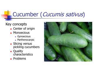 Cucumber Cucumis sativus