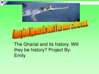 The Gharial and its history. Will they be history? Project By: Emily