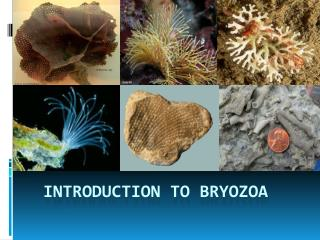 INTRODUCTION TO BRYOZOA