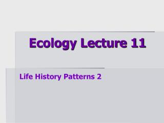 Ecology Lecture 11